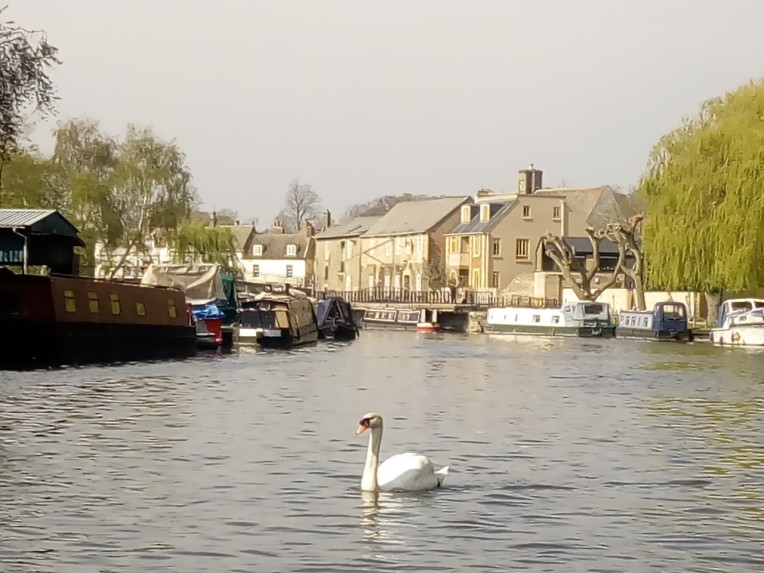 swan on ouse boat trip