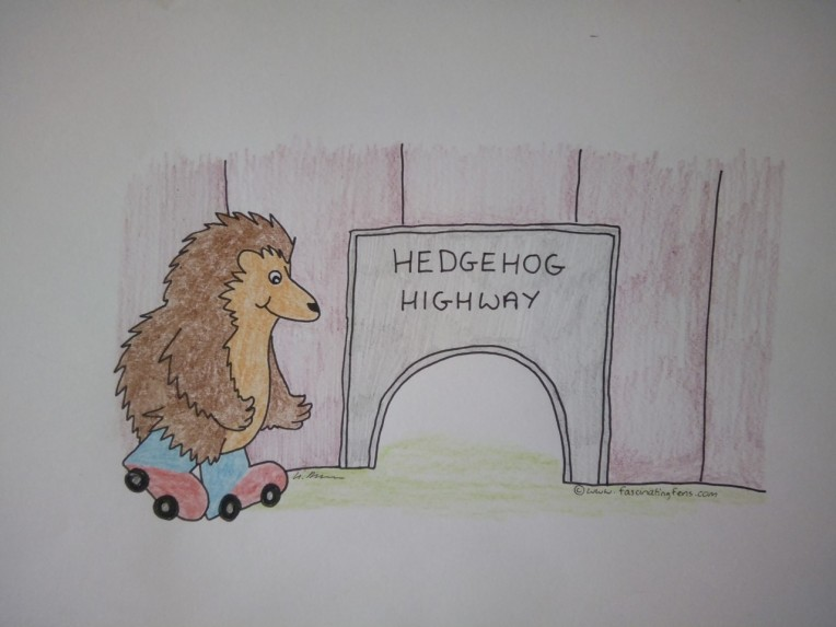 hedgehog highway wizzy