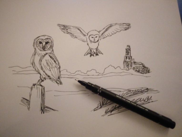 5 min owl sketch