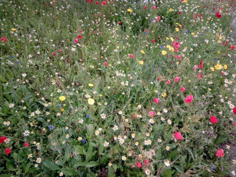 wild meadow papworth